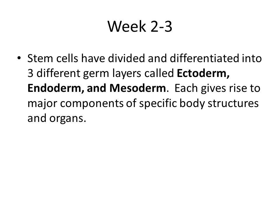 Week 2-3