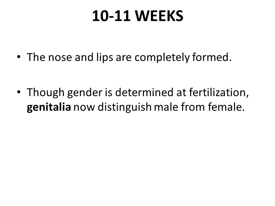 10-11 WEEKS The nose and lips are completely formed.