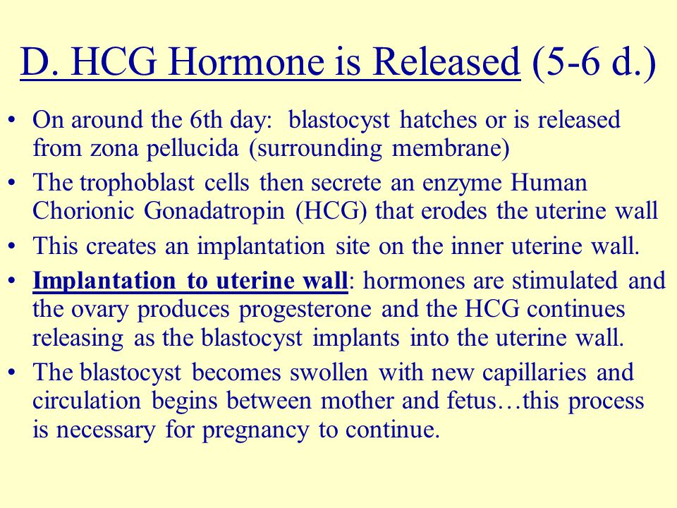D. HCG Hormone is Released (5-6 d.)