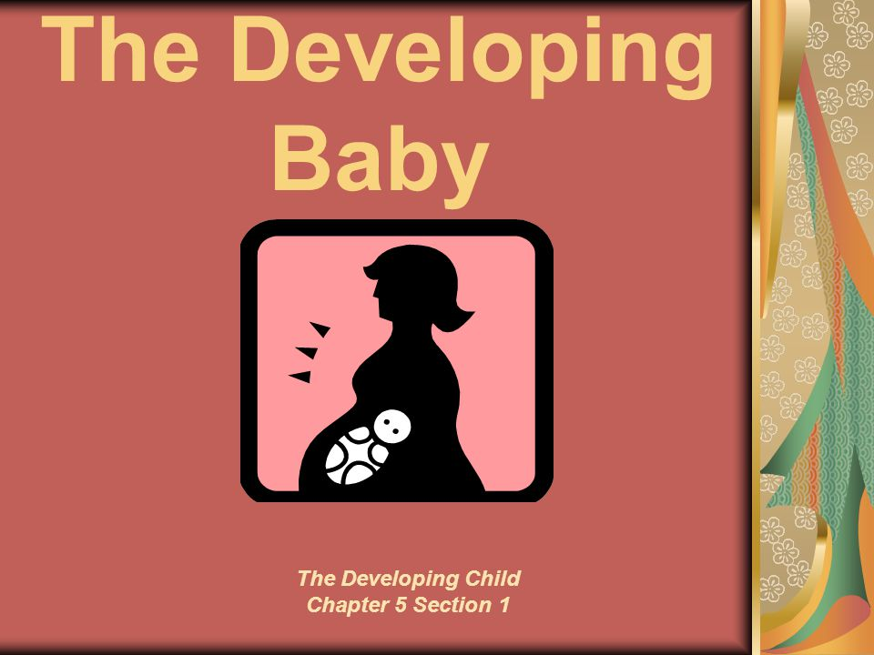 The Developing Baby The Developing Child Chapter 5 Section 1