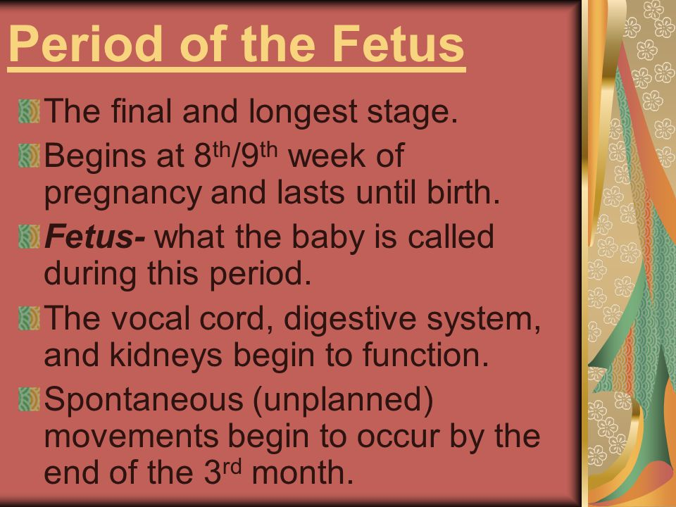 Period of the Fetus The final and longest stage.