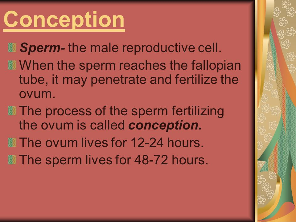 Conception Sperm- the male reproductive cell.