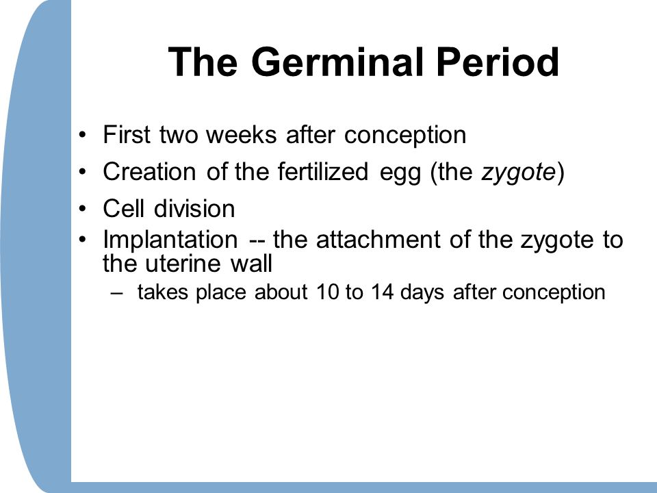 The Germinal Period First two weeks after conception