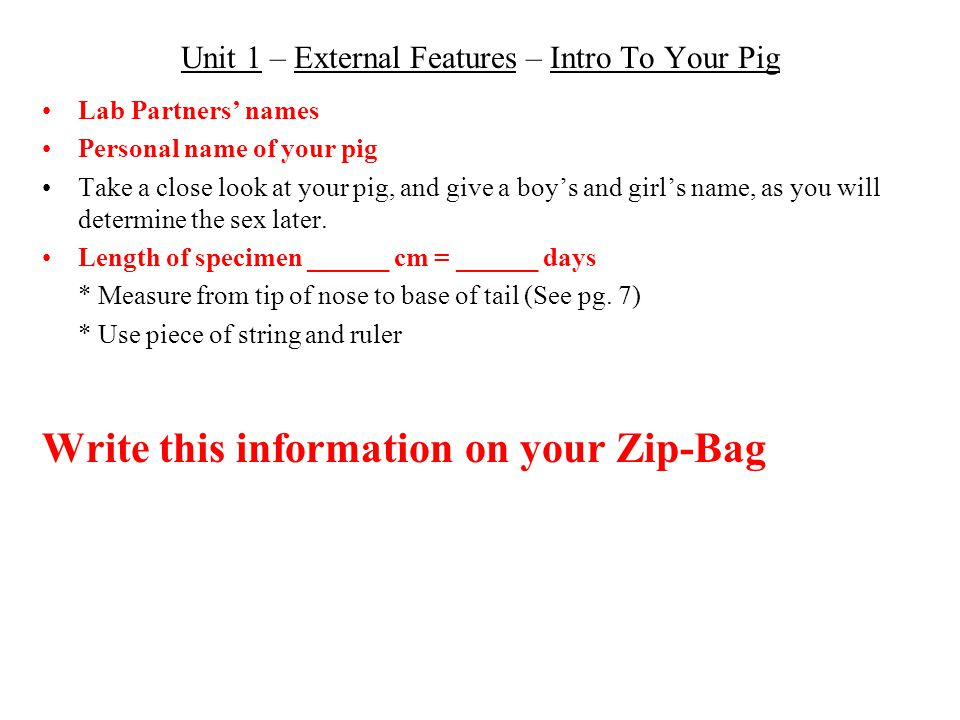 Unit 1 – External Features – Intro To Your Pig