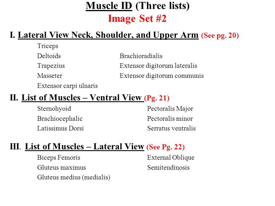 Muscle ID (Three lists) Image Set #2