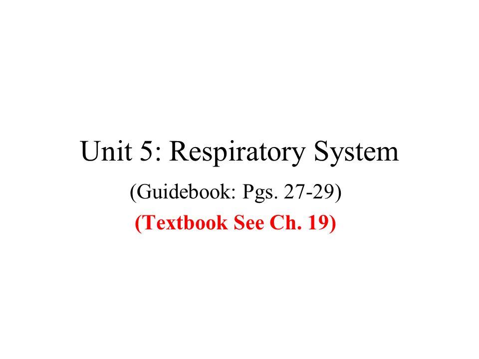 Unit 5: Respiratory System