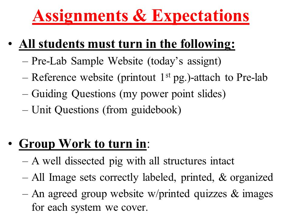 Assignments & Expectations