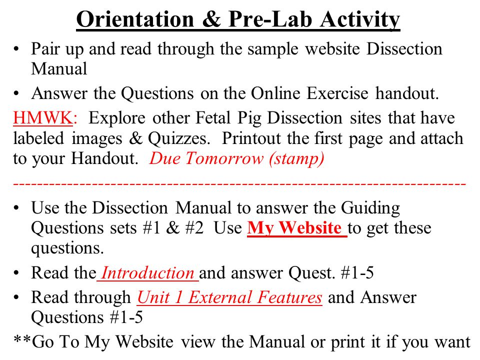 Fetal Pig Dissection Internal Anatomy Quizzes