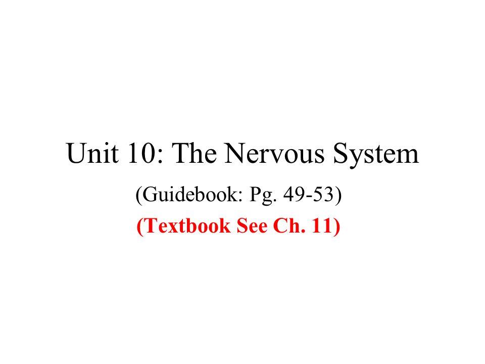 Unit 10: The Nervous System