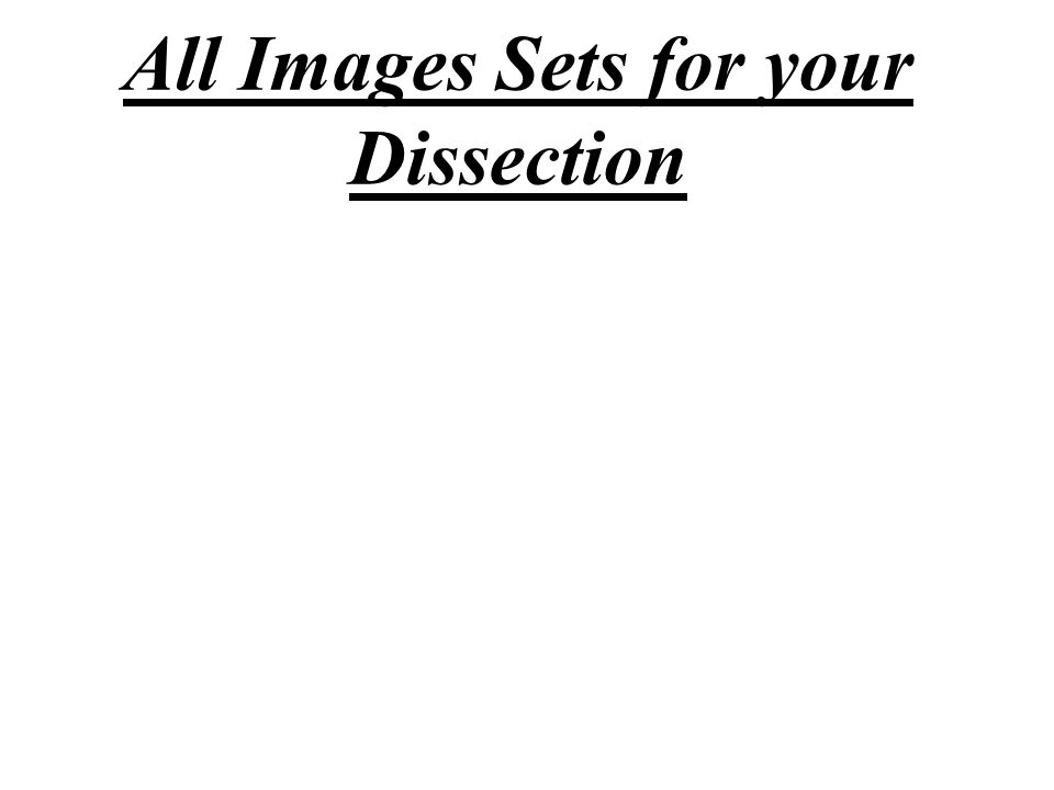 All Images Sets for your Dissection
