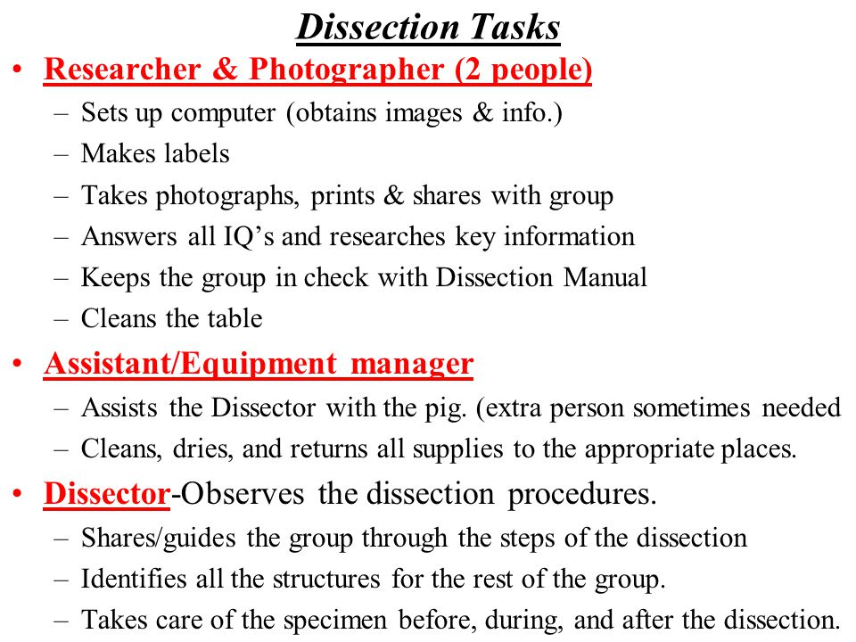 Dissection Tasks Researcher & Photographer (2 people)