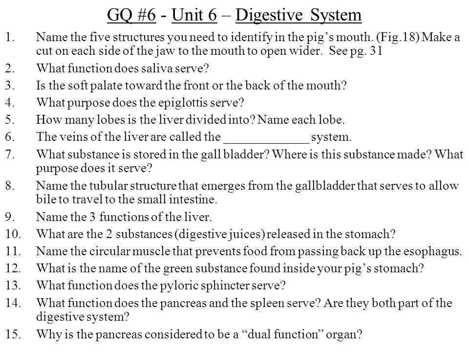 GQ #6 - Unit 6 – Digestive System