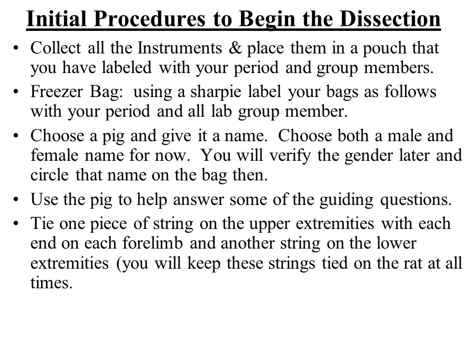 Initial Procedures to Begin the Dissection