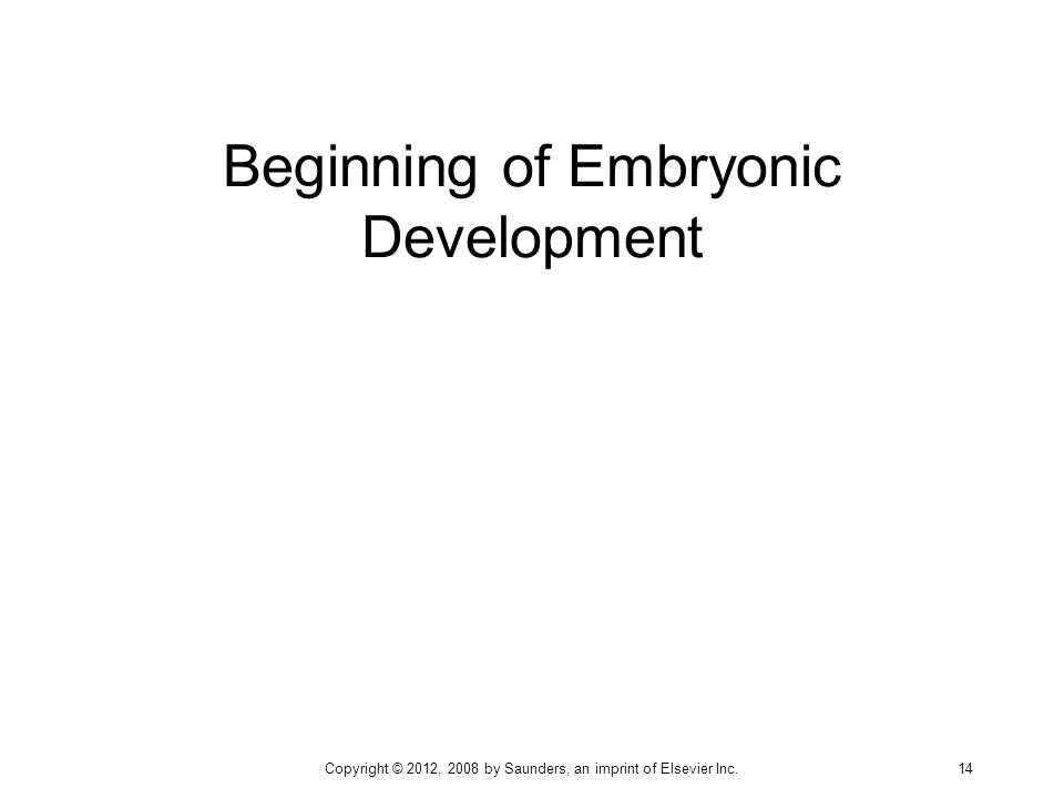 Beginning of Embryonic Development