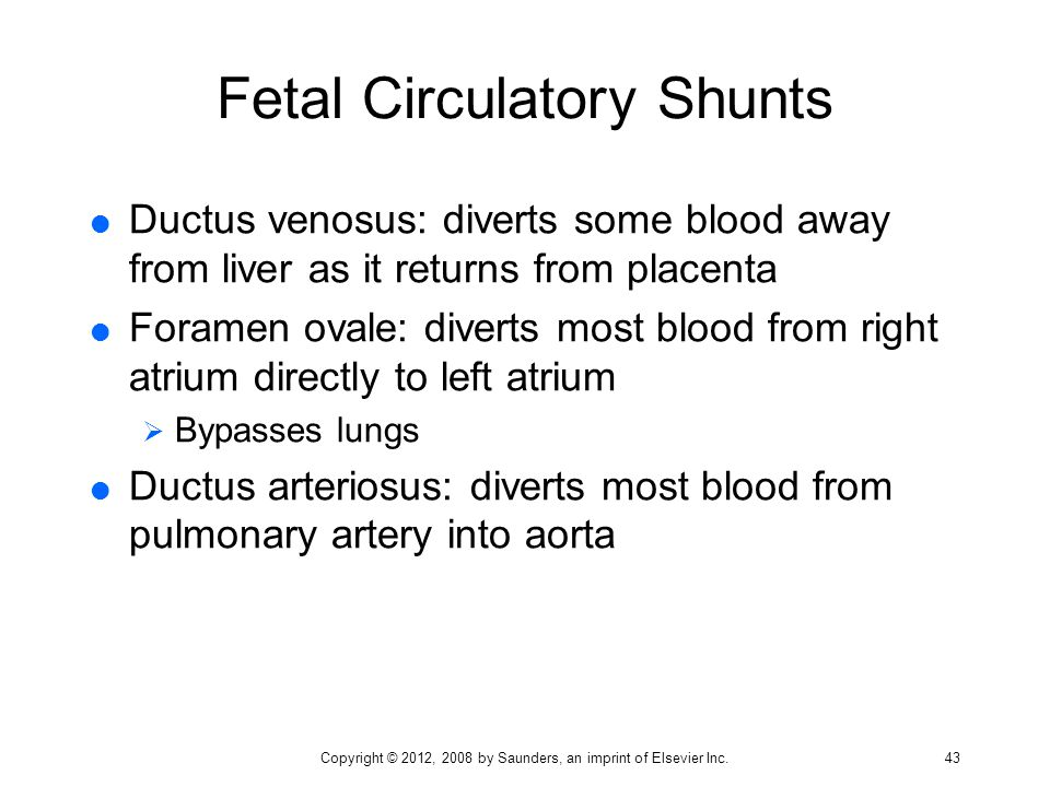 Fetal Circulatory Shunts