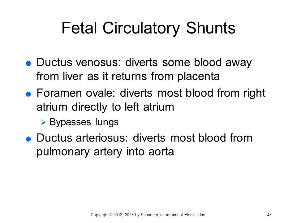 Fetal Circulatory Shunts