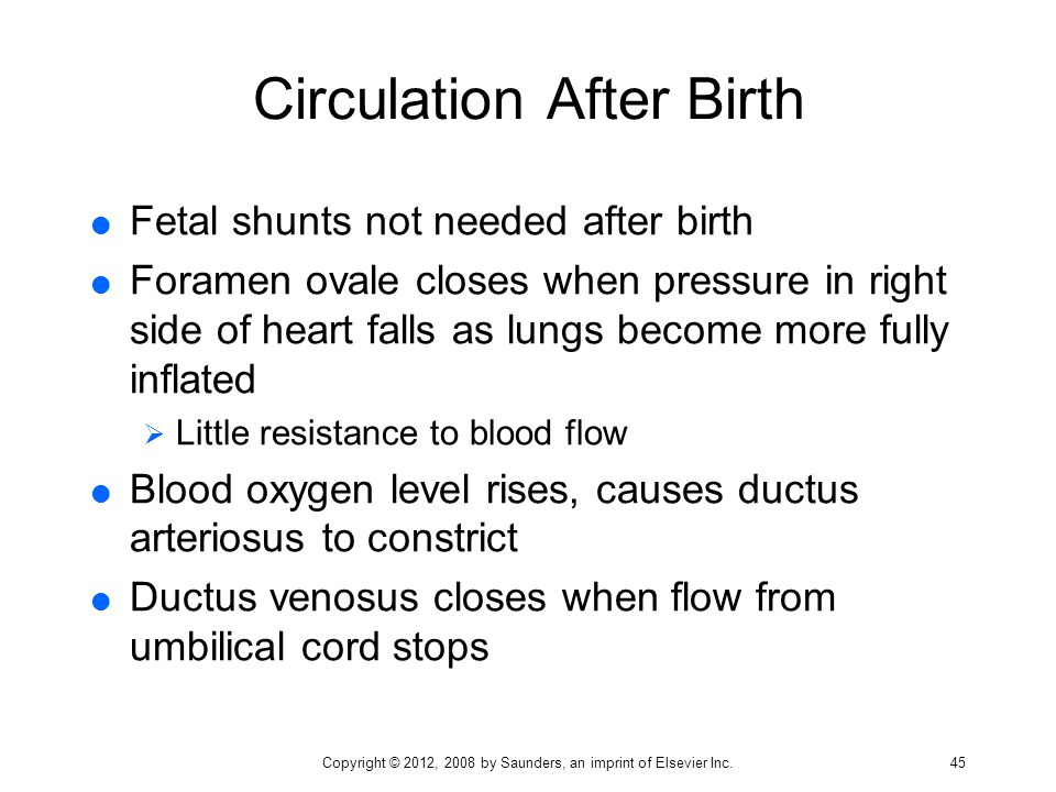 Circulation After Birth