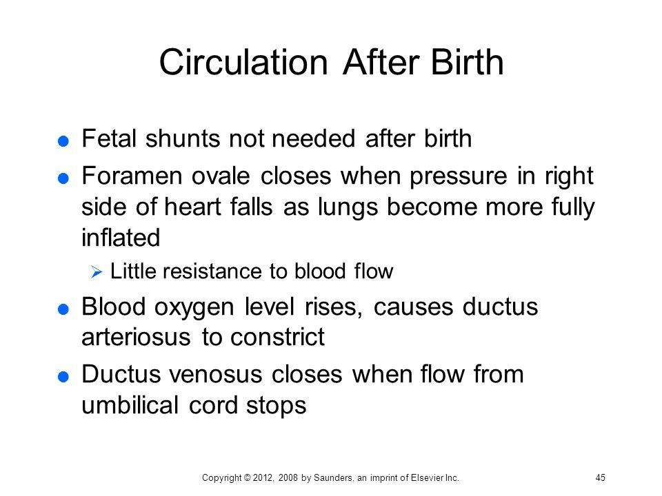 Circulation After Birth
