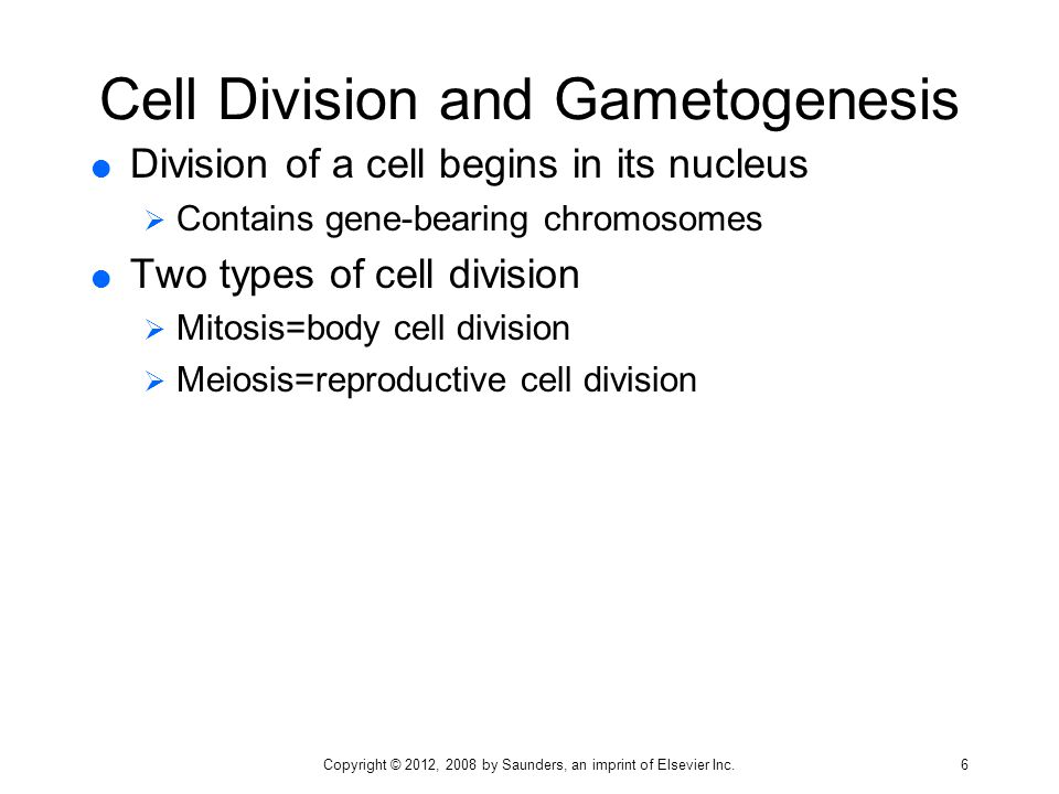Cell Division and Gametogenesis