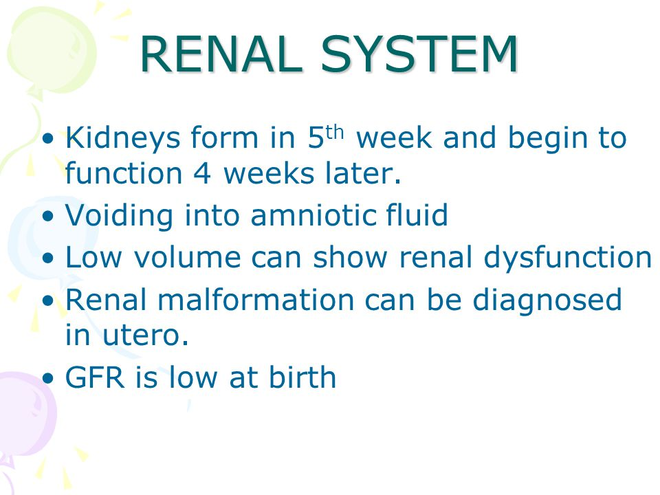 RENAL SYSTEM Kidneys form in 5th week and begin to function 4 weeks later. Voiding into amniotic fluid.
