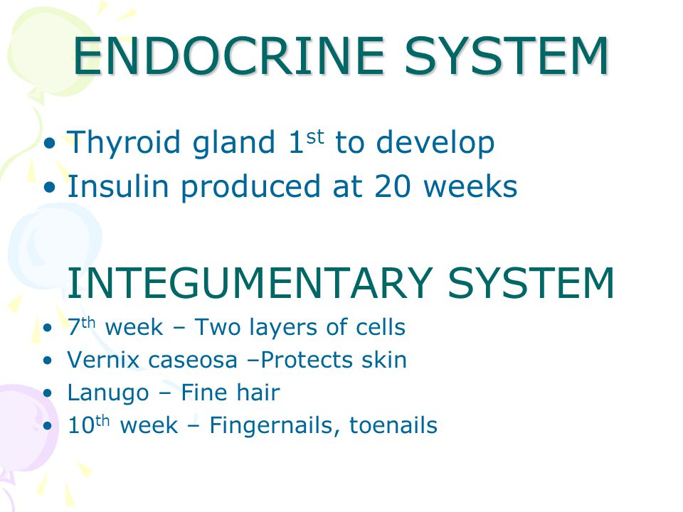 ENDOCRINE SYSTEM INTEGUMENTARY SYSTEM Thyroid gland 1st to develop