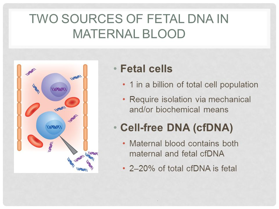 Two Sources of Fetal DNA in Maternal Blood