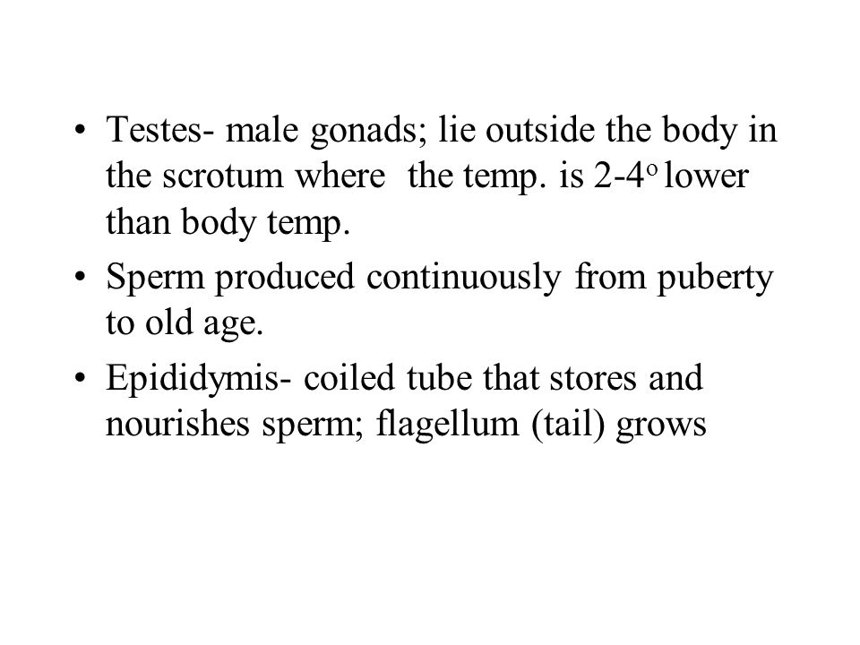 Testes- male gonads; lie outside the body in the scrotum where the temp. is 2-4o lower than body temp.