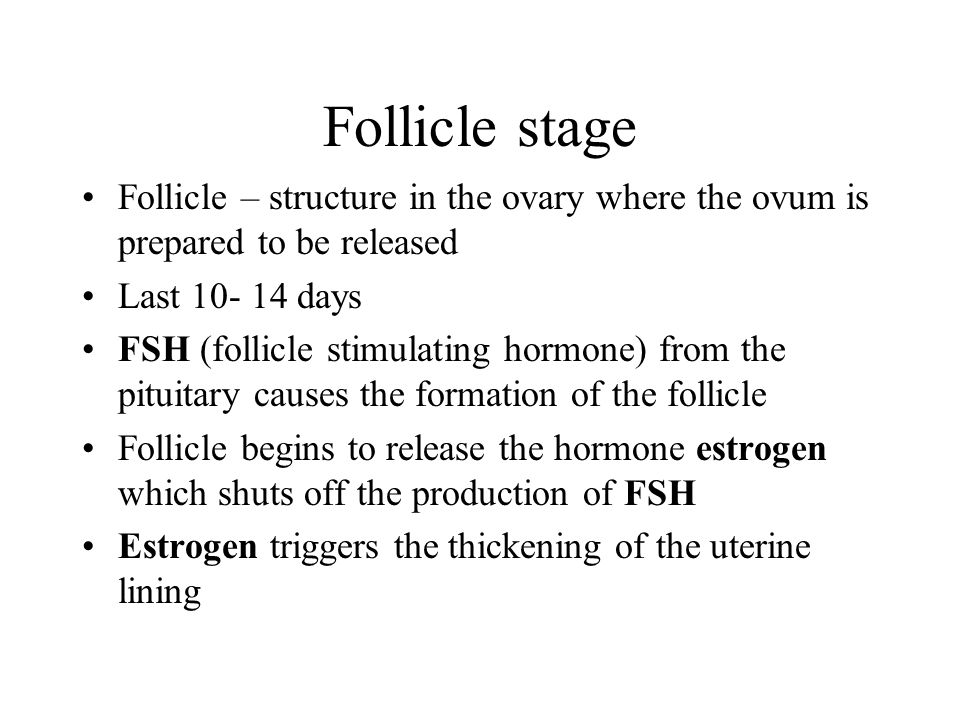 Follicle stage Follicle – structure in the ovary where the ovum is prepared to be released. Last 10- 14 days.