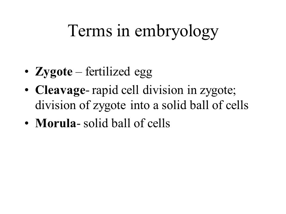 Terms in embryology Zygote – fertilized egg
