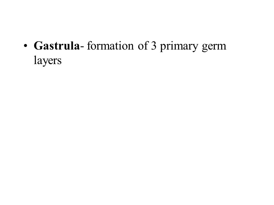 Gastrula- formation of 3 primary germ layers