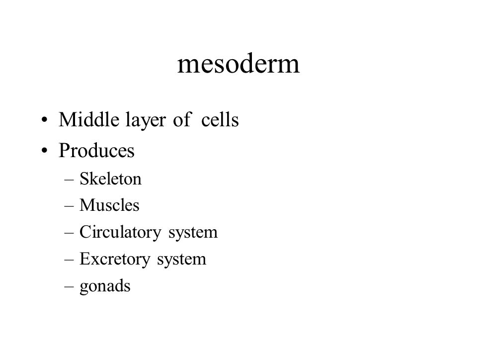 mesoderm Middle layer of cells Produces Skeleton Muscles