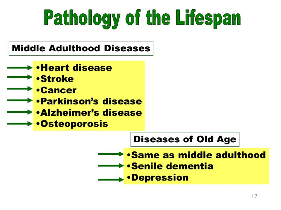 middle adulthood in lifespan development Analysis of the stages in life span development essayswhen breaking down the life span into stages such as childhood, adulthood, and late adulthood the break down seeks to bring unity to the life of human being, and ultimately helps us to understand the development of a person.