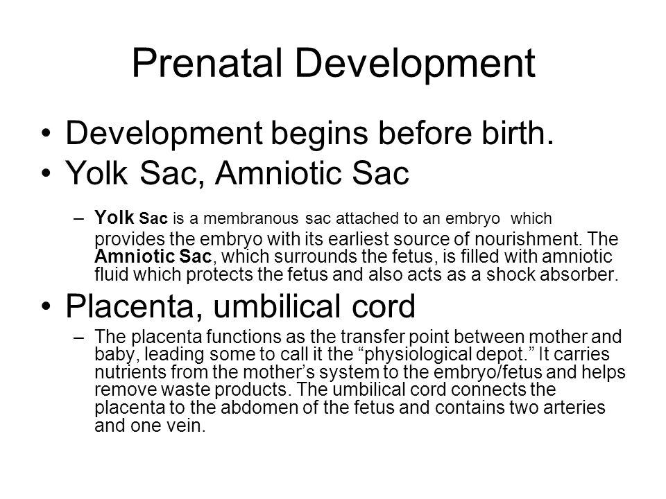 Prenatal Development Development begins before birth.