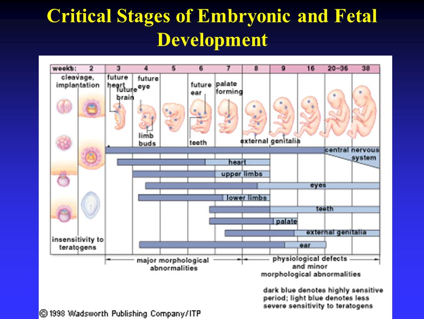 Critical Stages of Embryonic and Fetal Development