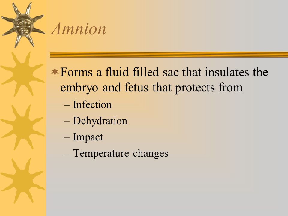 Amnion Forms a fluid filled sac that insulates the embryo and fetus that protects from. Infection.