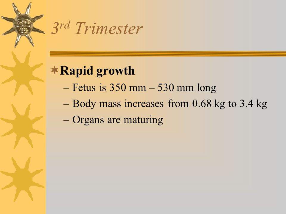 3rd Trimester Rapid growth Fetus is 350 mm – 530 mm long