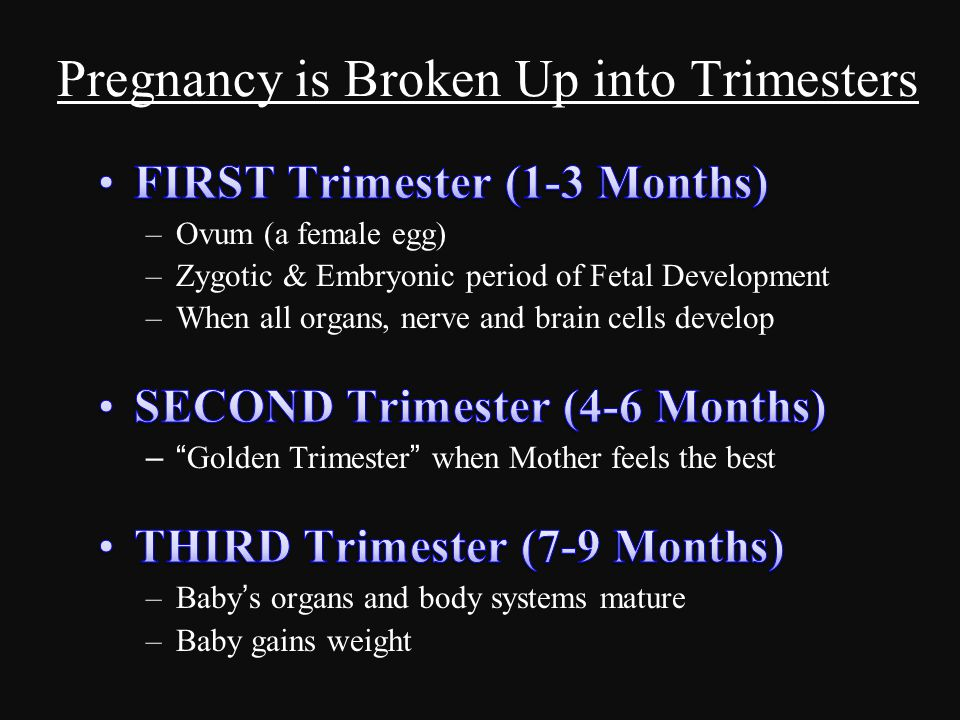 Pregnancy is Broken Up into Trimesters