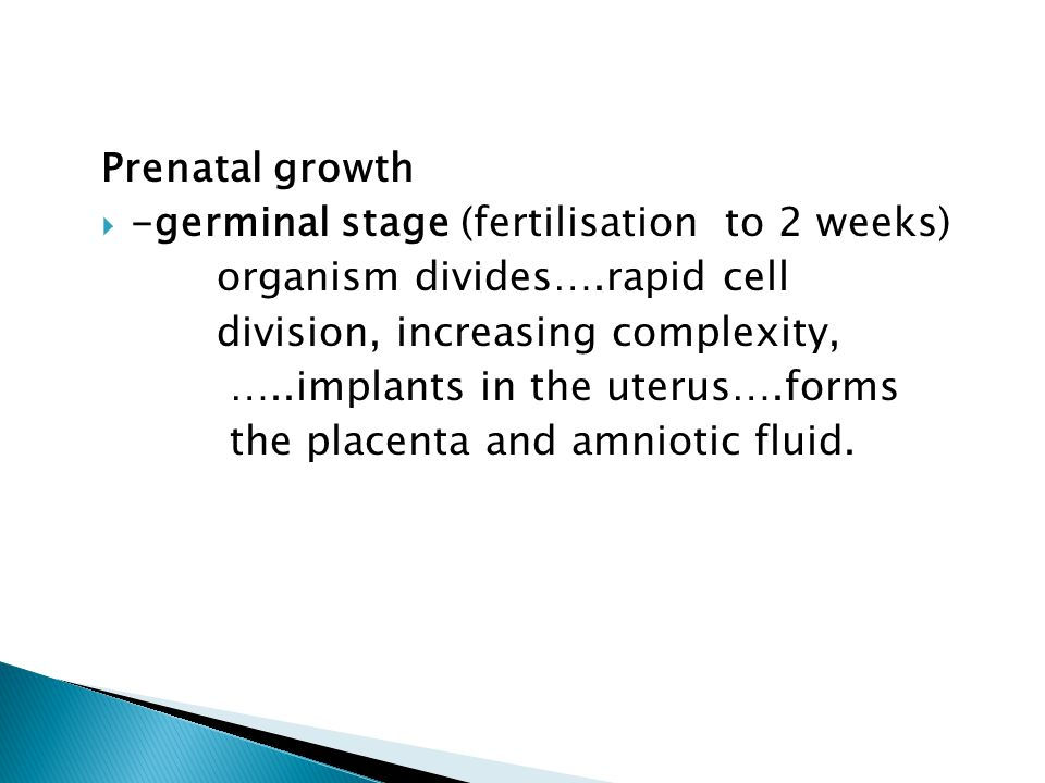 Prenatal growth -germinal stage (fertilisation to 2 weeks) organism divides….rapid cell. division, increasing complexity,