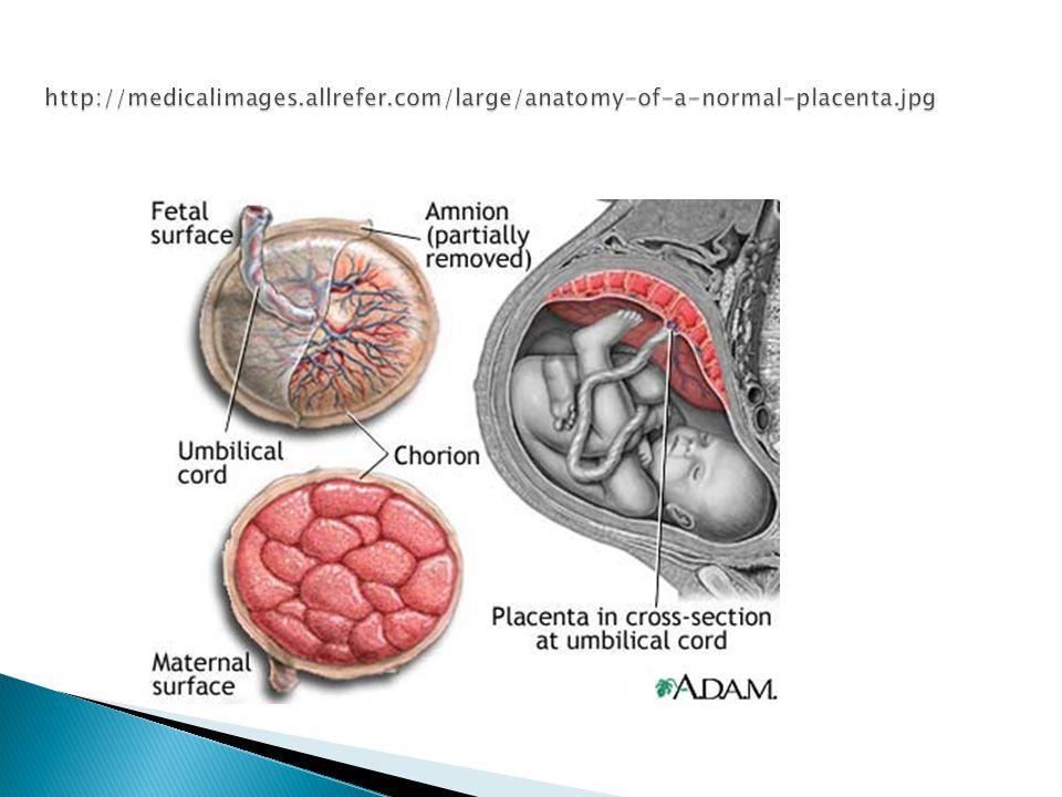 http://medicalimages. allrefer. com/large/anatomy-of-a-normal-placenta