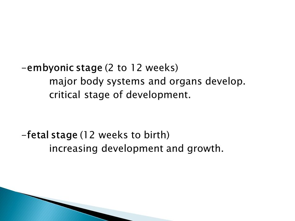 -embyonic stage (2 to 12 weeks)