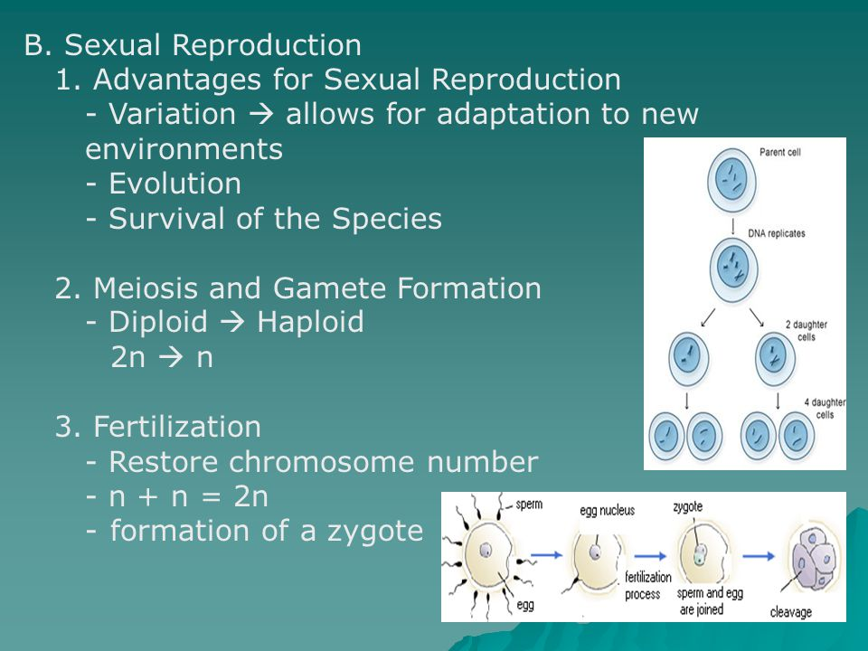 B. Sexual Reproduction 1. Advantages for Sexual Reproduction. - Variation  allows for adaptation to new.