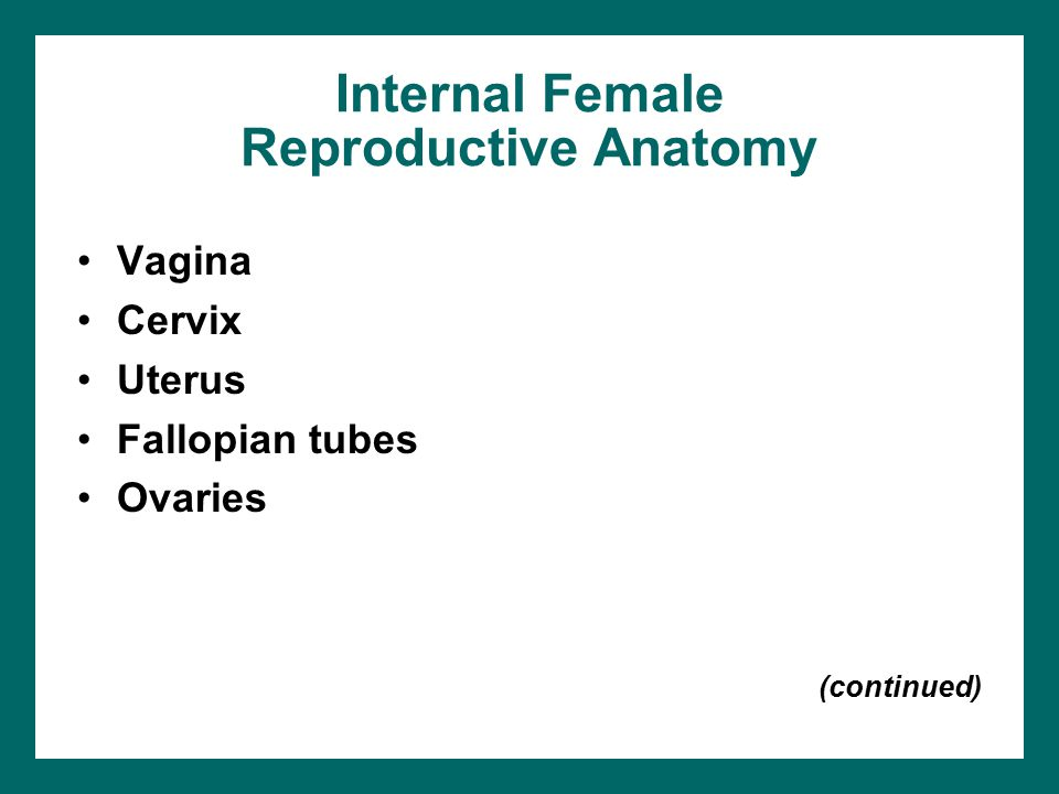 Internal Female Reproductive Anatomy