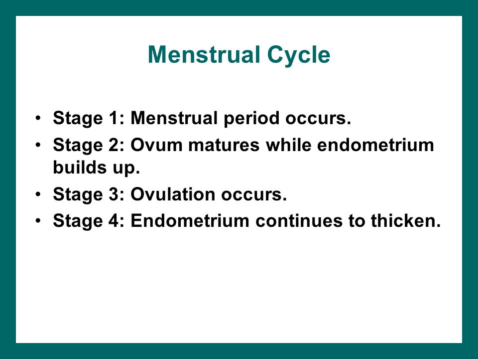 Menstrual Cycle Stage 1: Menstrual period occurs.