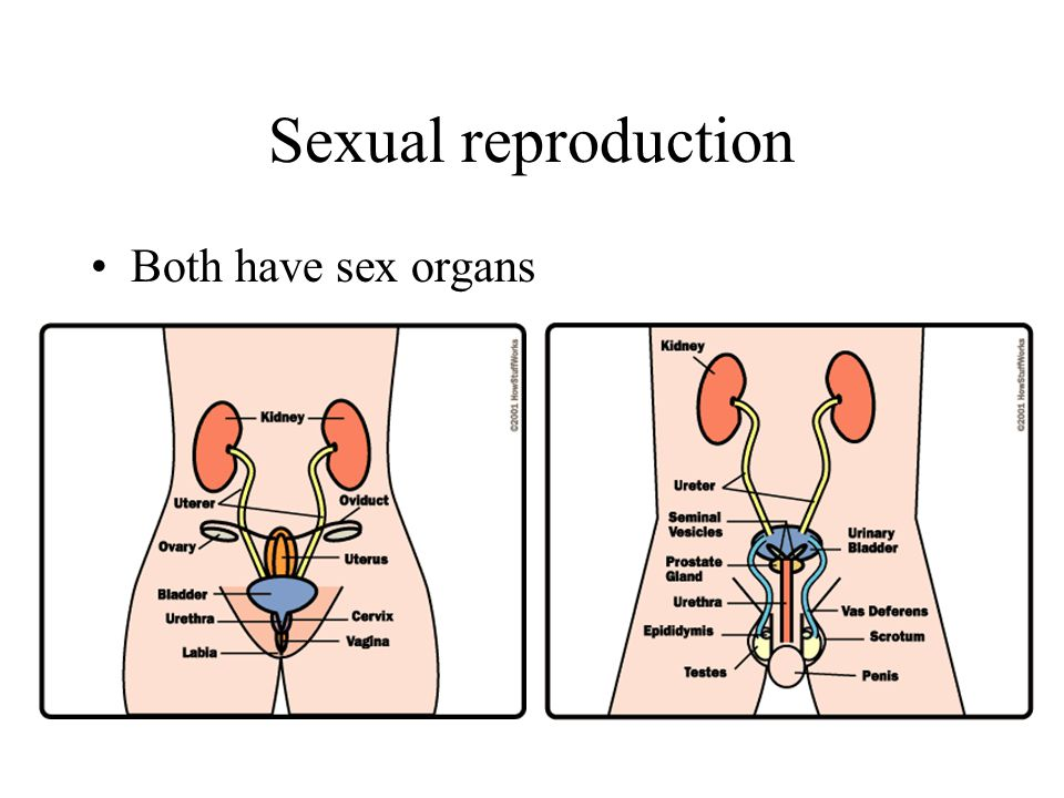 Sexual reproduction Both have sex organs