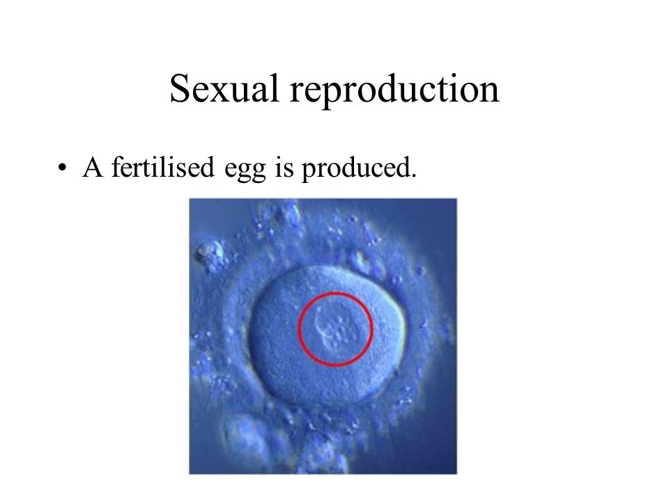 Sexual reproduction A fertilised egg is produced.