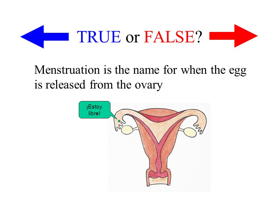 TRUE or FALSE Menstruation is the name for when the egg is released from the ovary ¡Estoy libre!