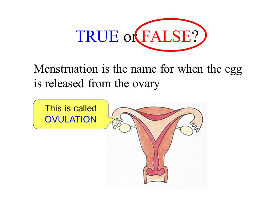 This is called OVULATION