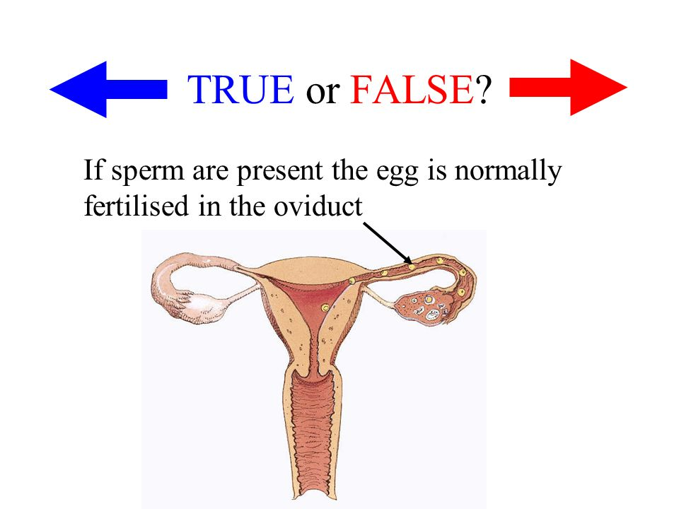 TRUE or FALSE If sperm are present the egg is normally fertilised in the oviduct