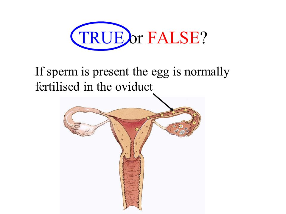 TRUE or FALSE If sperm is present the egg is normally fertilised in the oviduct