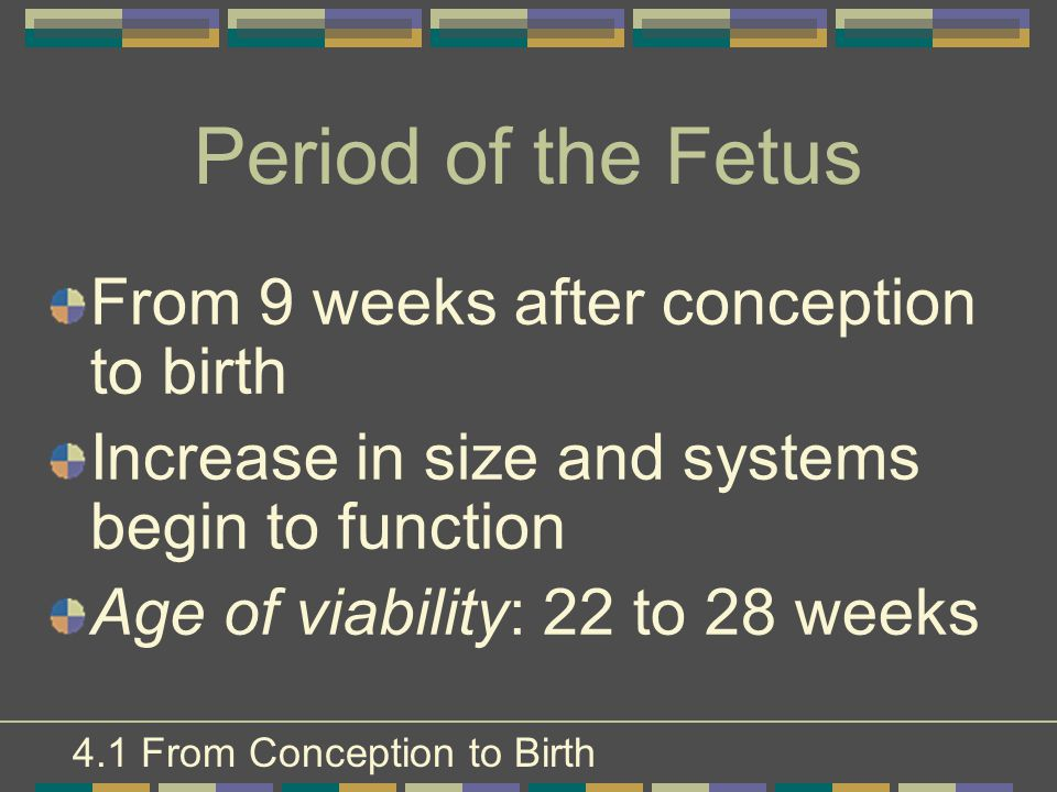 Period of the Fetus From 9 weeks after conception to birth